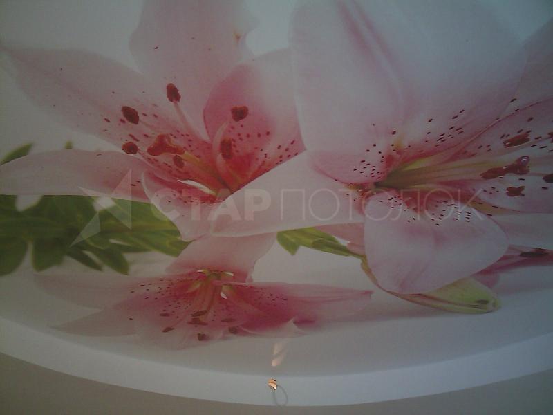 Цветы, букеты в туле заказать натяжной потолок